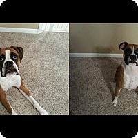 Adopt A Pet :: Toby and Titus - Alliance, NE