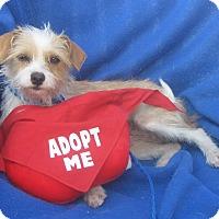 Adopt A Pet :: Tawny-WATCH MY VIDEO!!! - Irvine, CA