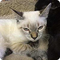 Adopt A Pet :: Sienna - Lawrenceville, GA