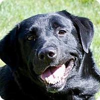 Adopt A Pet :: Layla - Portola, CA