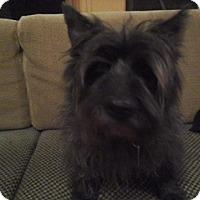 Adopt A Pet :: Bosley - Bellingham, WA