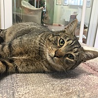 Adopt A Pet :: Kokomo - Tioga, PA