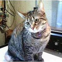 Adopt A Pet :: Misty - Trexlertown, PA