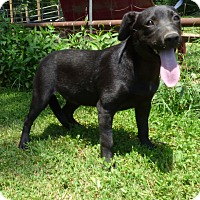 Adopt A Pet :: Pistol - Bedminster, NJ