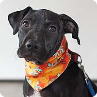 Adopt A Pet :: Cinder - Victoria, BC