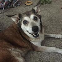 Adopt A Pet :: Casey - Blountstown, FL