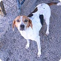 Adopt A Pet :: Caroline - Norfolk, VA