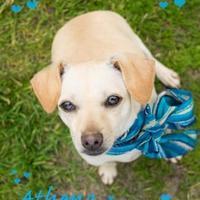 Adopt A Pet :: Athena - Seagoville, TX