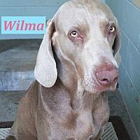 Adopt A Pet :: Wilma - El Cajon, CA