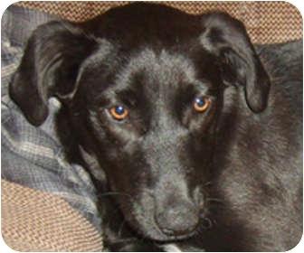 Labrador Retriever/Terrier (Unknown Type, Medium) Mix Dog for adoption in Parsons, Tennessee - Misty
