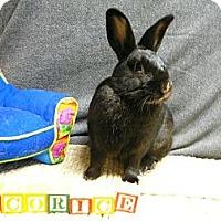 Adopt A Pet :: Licorice - Newport, DE