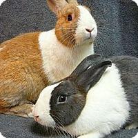 Adopt A Pet :: Dallas & Dayton - Newport, DE