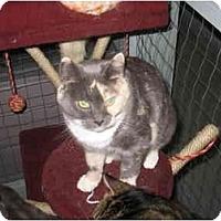 Adopt A Pet :: Chablis - Mission, BC