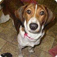 Adopt A Pet :: CROMWELL - Dix Hills, NY