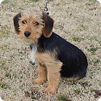 Adopt A Pet :: *Jelly - PENDING - Westport, CT