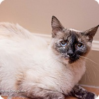 Adopt A Pet :: Sunshine - Fountain Hills, AZ