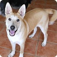 Adopt A Pet :: Ollie - dewey, AZ