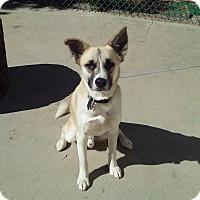 Adopt A Pet :: Rudy - North Hollywood, CA