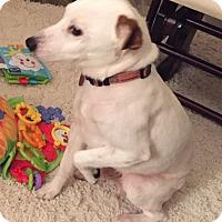 Adopt A Pet :: Astro in Houston - Austin, TX