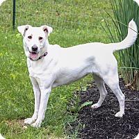 Adopt A Pet :: Riley - New Oxford, PA