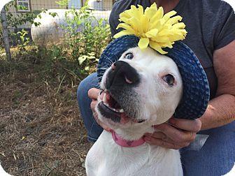 Hound (Unknown Type) Mix Dog for adoption in New York, New York - Sarabi