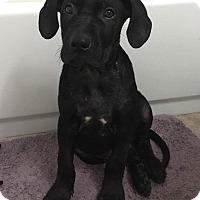 Adopt A Pet :: Duke - Wichita Falls, TX