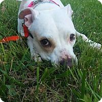 Adopt A Pet :: Mimi - Centerburg, OH