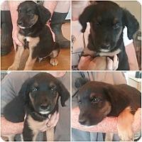 Adopt A Pet :: Jett - Plainfield, IL
