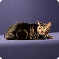 Adopt A Pet :: Abraham (Shy) - Adoption Fee Sponsored - Cary, NC