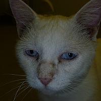 Adopt A Pet :: Alaska - Hamburg, NY