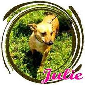 Chihuahua Mix Dog for adoption in Orlando, Florida - Julie