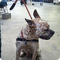 Adopt A Pet :: Gizmo - Blanchard, OK
