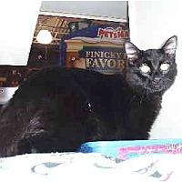 Adopt A Pet :: Benny - Scottsdale, AZ