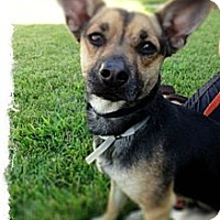 Adopt A Pet :: Denny - Lake Forest, CA