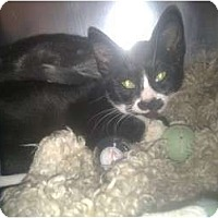 Adopt A Pet :: The Three Brothers - Staten Island, NY