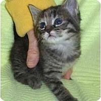 Adopt A Pet :: Brion - Richmond, VA