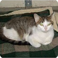 Adopt A Pet :: Alli - Troy, OH