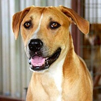 Adopt A Pet :: Tom Sawyer - Clifton, TX