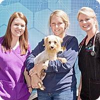 Adopt A Pet :: Matilda - Cashiers, NC
