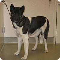 Akita Mix Dog for adoption in Wildomar, California - Metzy