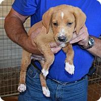 Adopt A Pet :: Griffin - ADOPTION PENDING - Northville, MI