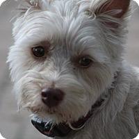 Adopt A Pet :: Rufus - Cape Coral, FL