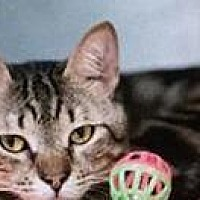 Adopt A Pet :: Louie - Freeport, NY