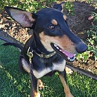 Adopt A Pet :: Tera - Livonia, MI