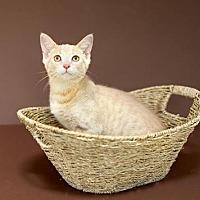 Adopt A Pet :: Gary - Williamston, MI