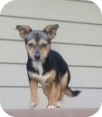 Chihuahua/Dachshund Mix Dog for adoption in Staunton, Virginia - Mary - ($50 off!)