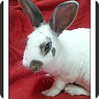 Adopt A Pet :: Macon - Williston, FL