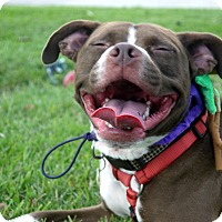 Adopt A Pet :: Daisy Girl - Baton Rouge, LA