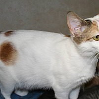 Adopt A Pet :: Trissy - Salisbury, NC