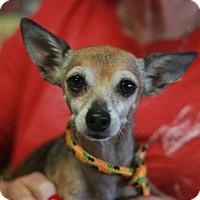Adopt A Pet :: Guapo - Canoga Park, CA
